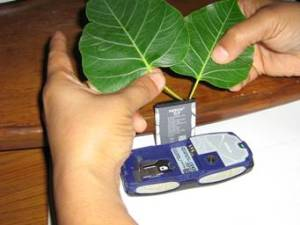 Free Mobile Charging by Tree